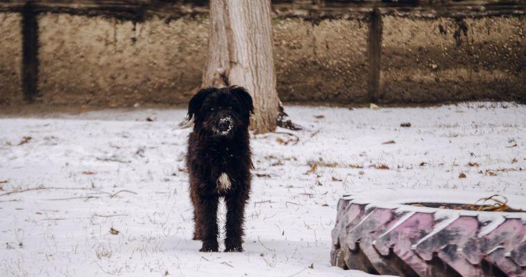 В Магнитогорске бездомных животных будут отпускать на волю после передержки в приюте