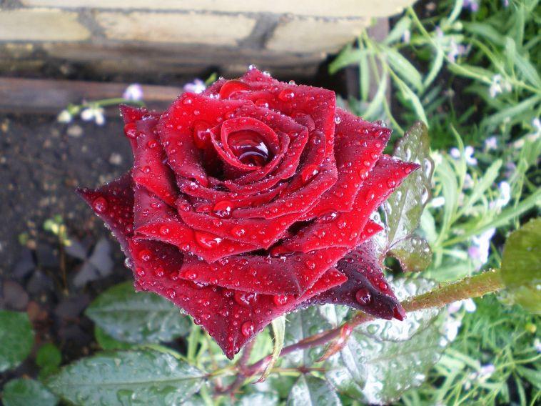 Жительница Магнитогорска заплатила занесуществующие цветы
