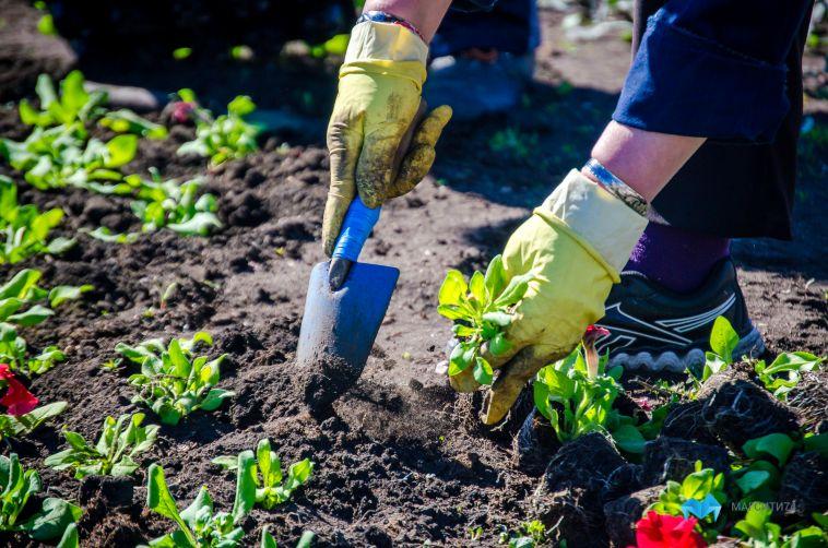 Более семисот тысяч цветов будут украшать город этим летом
