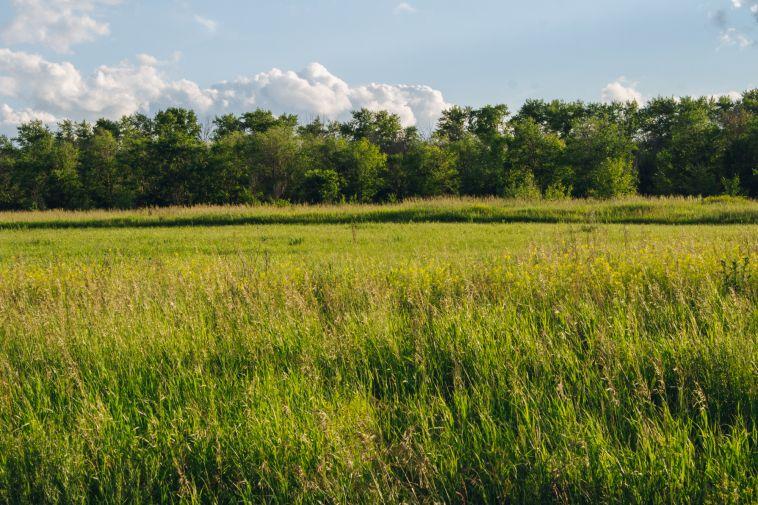 В четырёх районах Южного Урала ввели режим ЧСиз-за засухи