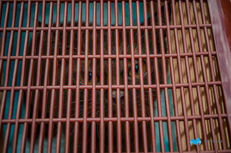 В посёлке под Магнитогорском объявили карантин из-за случая бешенства