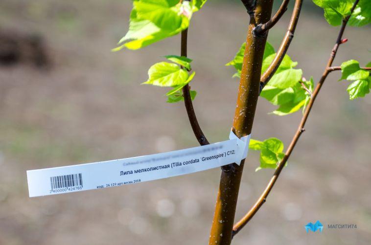 В Магнитогорске готовы потратить 15 млн на озеленение парка у Вечного огня
