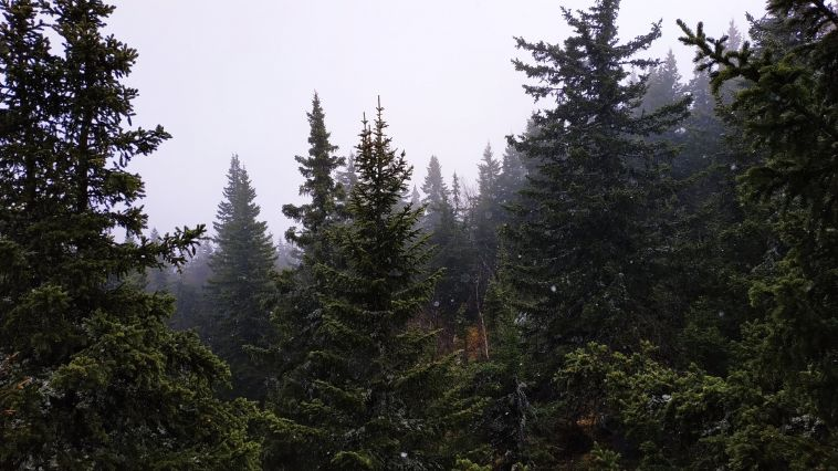 В горах Башкирии засняли первый снег