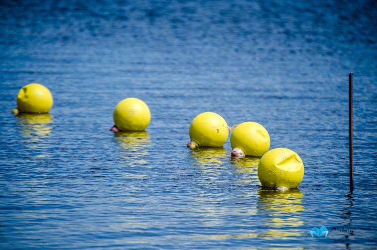 Нароссийских пляжах запретили животных иплавать надосках