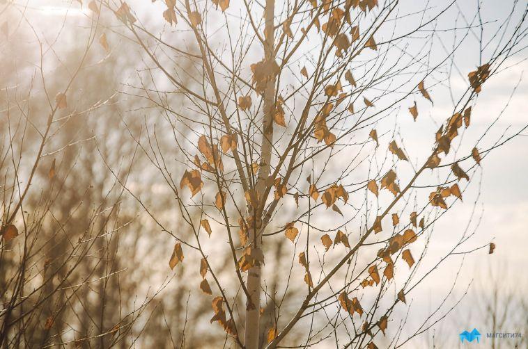 Осторожно! Замерзающий туман. Прогноз погоды на 10 ноября