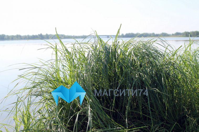 В следующем году в Урал выпустят 200 тысяч мальков сазана