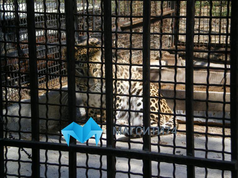 Областные депутаты предложили гуманные поправки в закон «О животном мире»