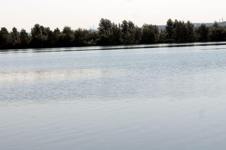 В реку Урал выпустили мальков белого амура и белого толстолобика