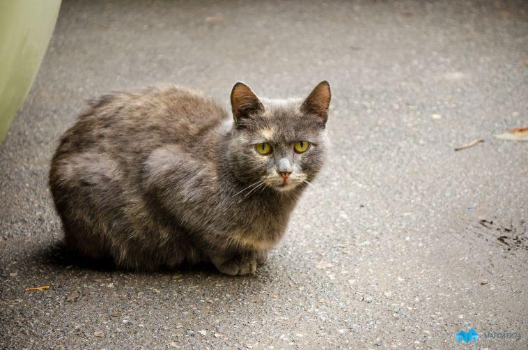 Кот ночью устроил переполох в медцентре Магнитогорска