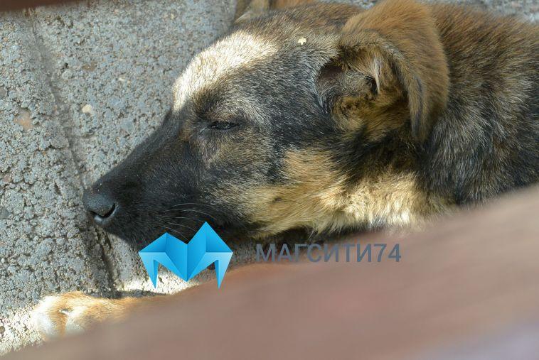 Жительница Челябинска привязала своего пса к двери ветеринарной клиники