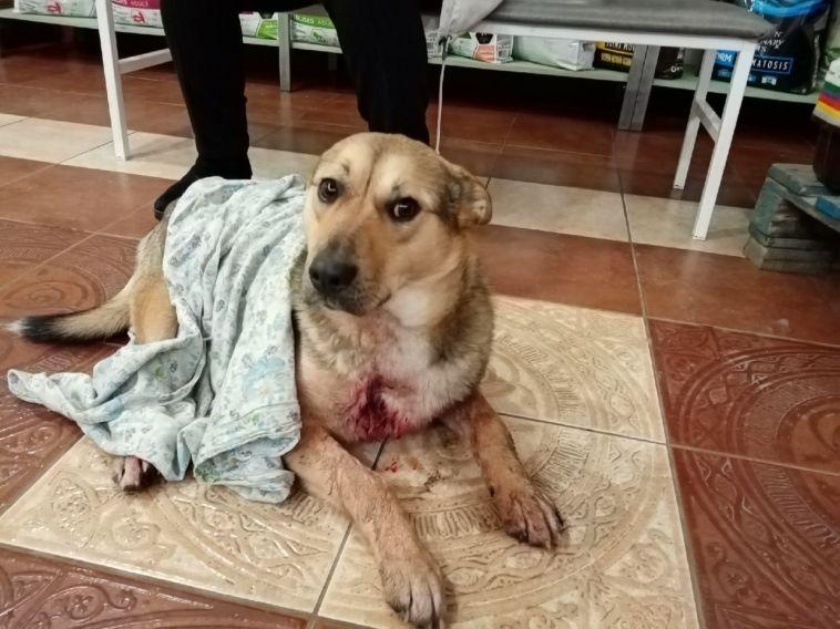 «Стреляли вупор»: вМагнитогорске убили несколько собак