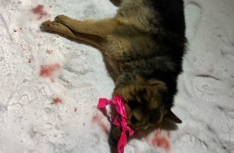 В Магнитогорске неизвестные сбросили собаку сокна многоэтажки