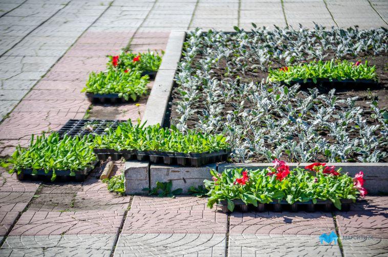 Город становится ярче. До конца июня в Магнитогорске высадят более 700 тысяч цветов
