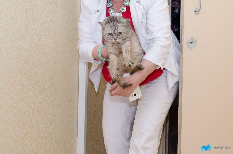 В Магнитогорске кошек и собак будут прививать от коронавируса