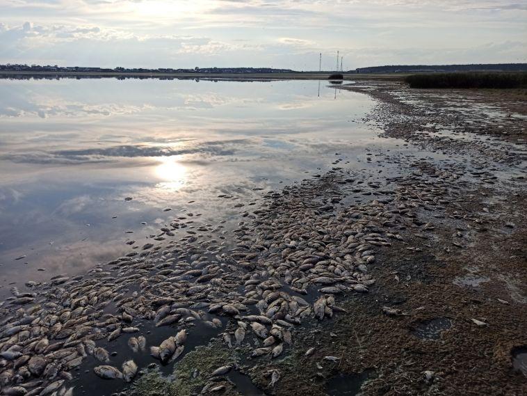 На озере Ачакуль почти вся рыба оказалась на берегу