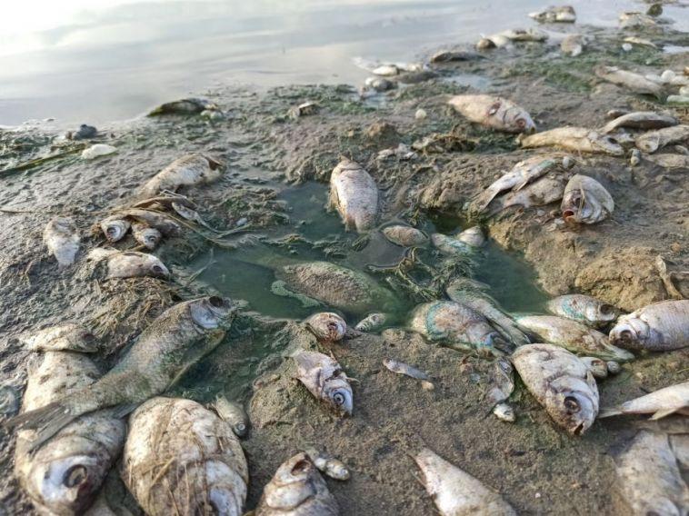 В Минэкологии объяснили мор рыбы на озере Ачакуль в Нагайбакском районе