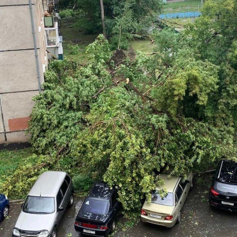 В Магнитогорске во время сильного ветра рухнуло дерево
