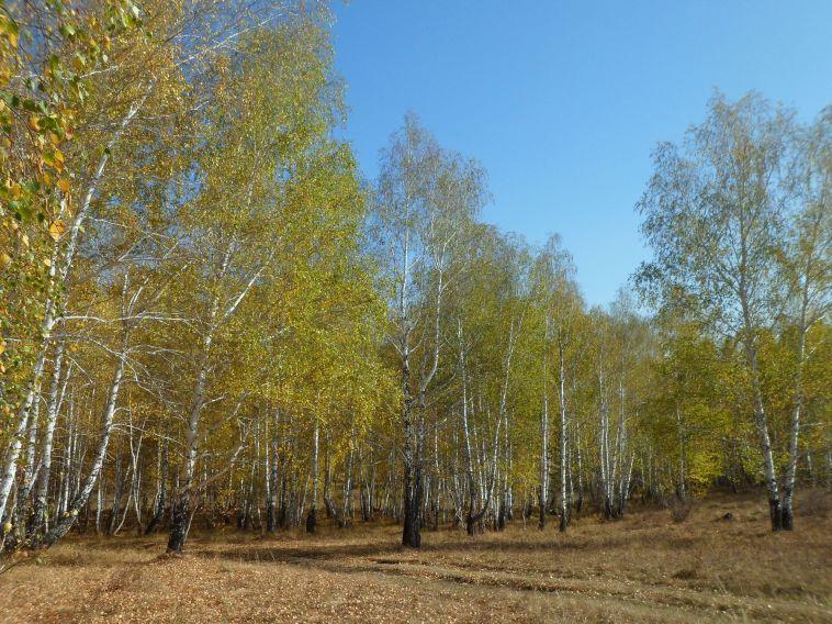 ВЧелябинской области ожидаются заморозки