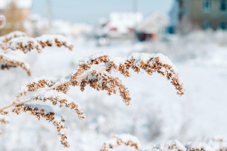 В Челябинской области выпал первый снег