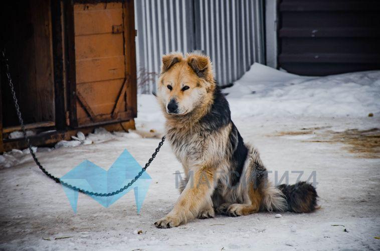 В Челябинском приюте для собак произошёл пожар