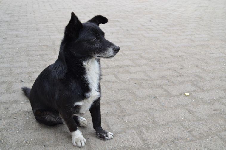 ВМагнитогорске надетей стали чаще нападать бездомные животные