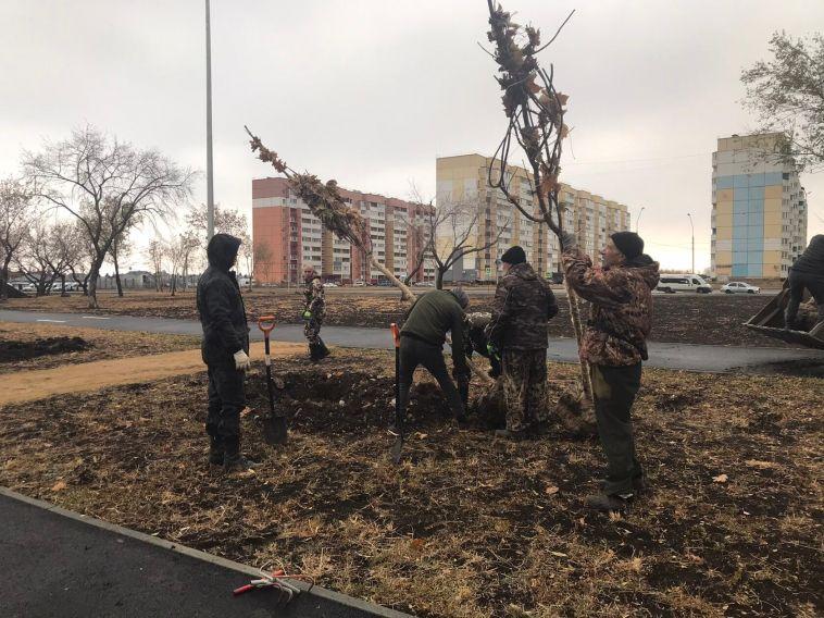ВМагнитогорске высадили более 100 кленов