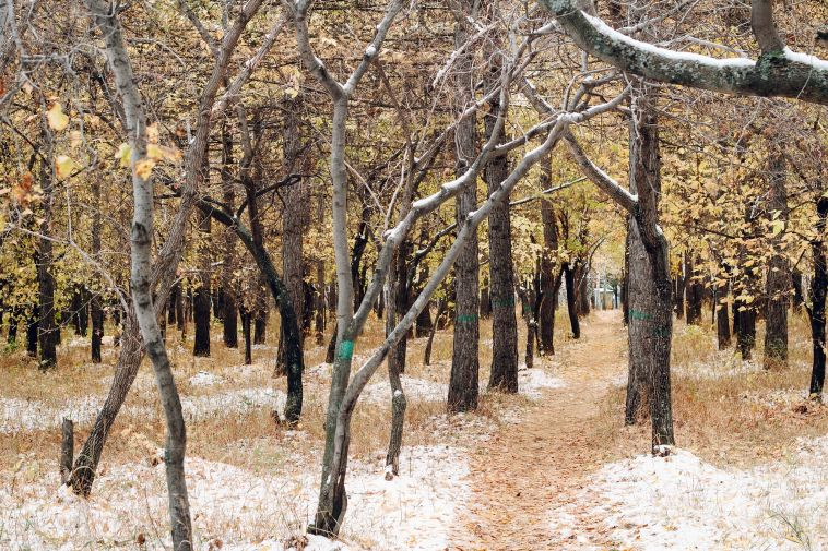 В понедельник в Магнитогорске ожидается снег с дождём