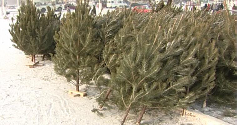 Вместо елочного базара – елочная свалка: горожане жалуются на мусор, который оставили после себя торговцы хвойными деревьями ФОТО