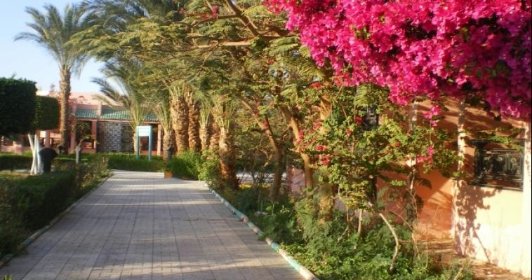 Египет отменил визовые сборы для российских туристов