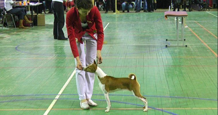 В Магнитогорске пройдут веселые соревнования для собак
