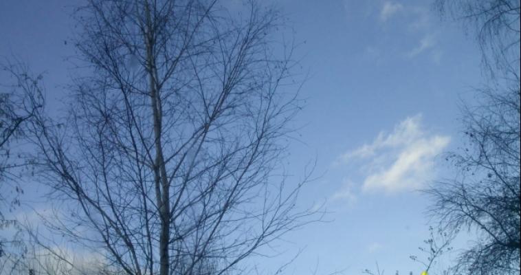 Ранней весны не будет. Сурок Соня предсказала погоду на Южном Урале