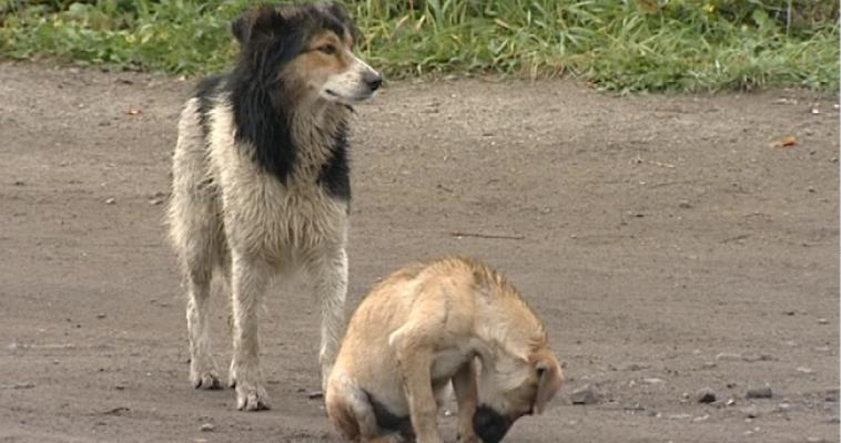 Специалисты Россельхознадзора проверили питомник собак мини-пород