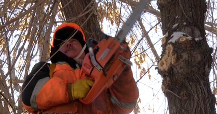 Омолаживающая и санитарная: коммунальные службы приступили к обрезке деревьев