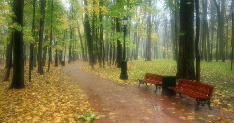 Россельхознадзор разрешил ввоз лесоматериалов из Украины