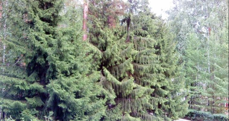 Магнитогорцы могут создать свой собственный лес в национальном парке