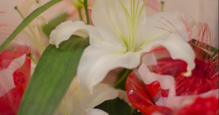 Дарите женщинам цветы! Как выбрать и сохранить свой подарок