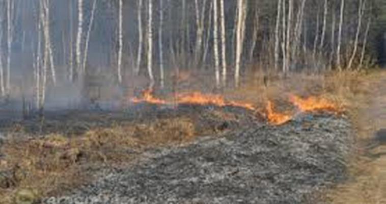 За сутки пожарные 18 раз тушили горящую траву