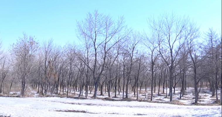 Первые месяцы 2015 года — самые теплые за последние 125 лет