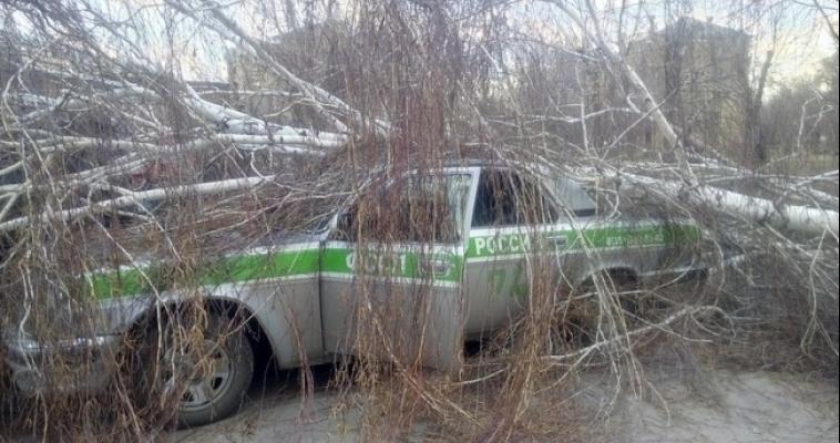 На автомобиль службы судебных приставов упало дерево