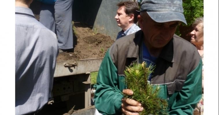 Посади своё дерево: магнитогорцам раздают бесплатные саженцы