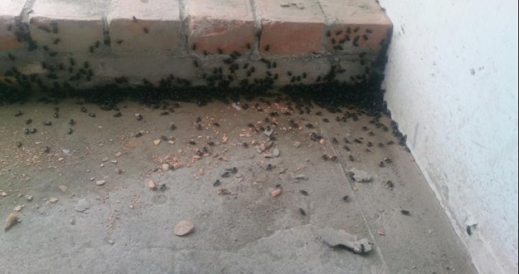 «Лезут со всех щелей». Магнитогорцы заметили полчища странных жуков