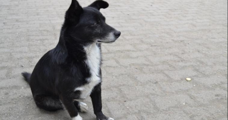 Россельхознадзор отправил собаку, прилетевшую из Турции, на карантин