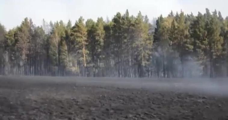 Более 100 га леса и степи сгорело в Кизильском районе