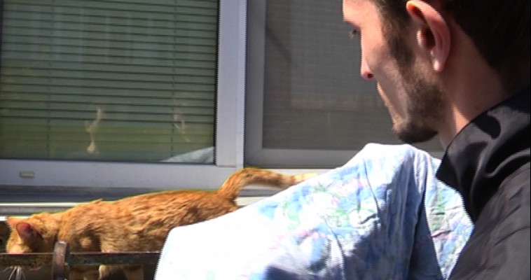 Жильцы дома спасли рыжего кота, который без еды и воды просидел трое суток на окне третьего этажа