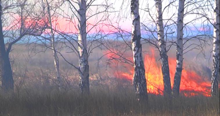 Область горит! Уже в 14 районах региона введен особый противопожарный режим