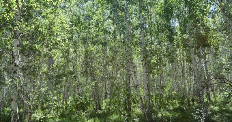 Чабан и лесовод. В Центре занятости назвали необычные вакансии