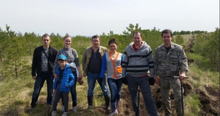 Сотрудники прокуратуры посадили 621 дерево под Магнитогорском