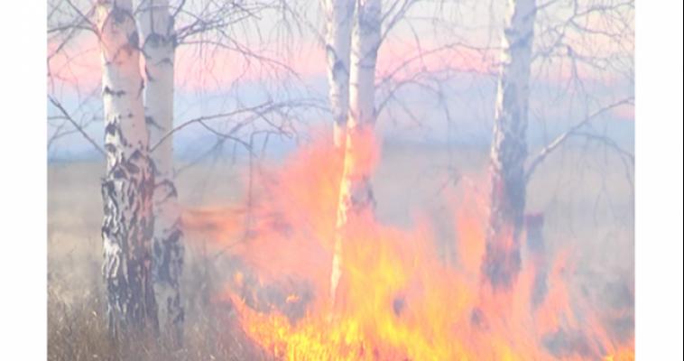 Возможны лесные пожары