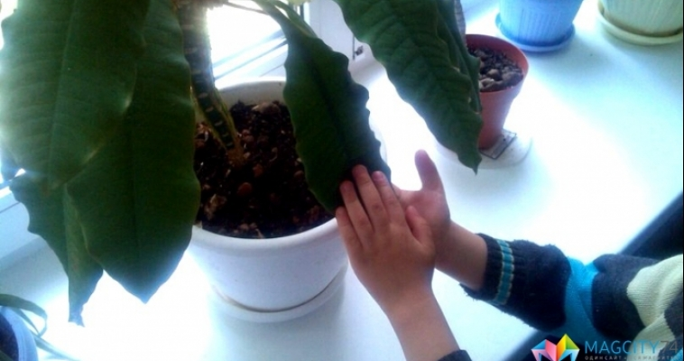 Растения чувствуют ваши прикосновения