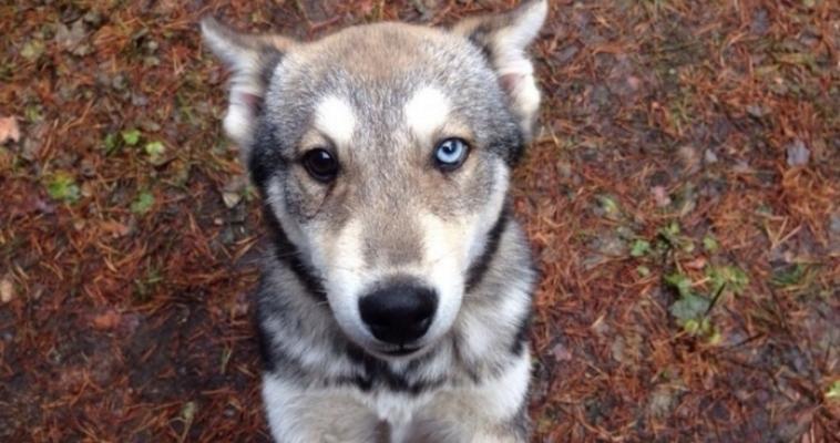 Россиян обязали регистрировать котов и собак наравне с другими домашними животными